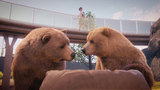 动物园之星生出灰熊任务怎么做 社区任务攻略分享
